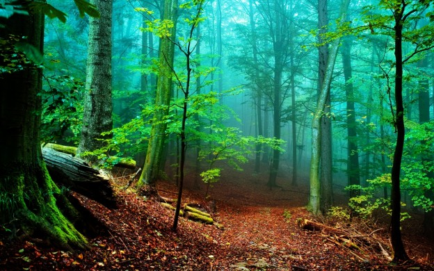 forest-fog-1280x800-wallpaper-8313