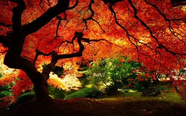 maple in autumn 1280x800 wallpaper 3470 e1360004649631 30+ Free Nature Wallpapers HD