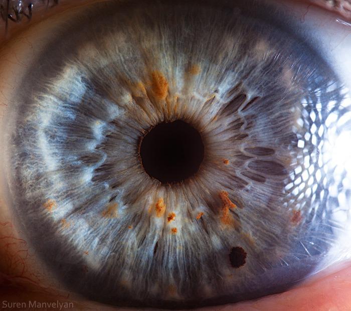 Macro photography Of Human Eyes - Creatives Wall