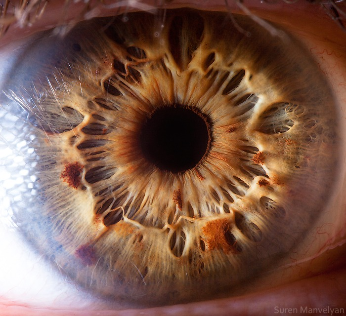 Macro Photography Of Human Eyes