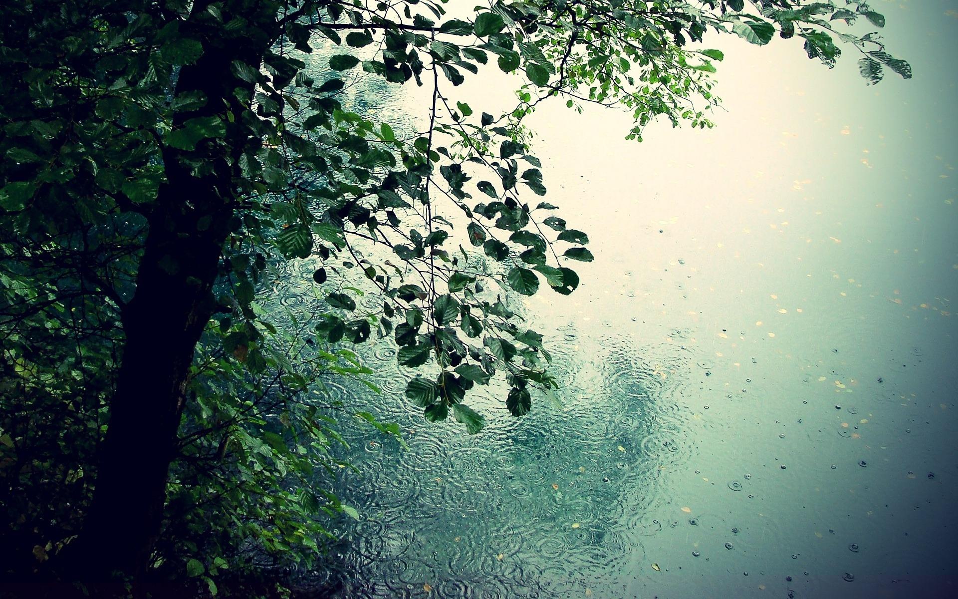 beautiful rain wallpapers for your desktop