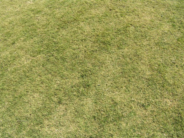 grass texture 08 e1399399154475 65+ Free High Resolution Grass Textures