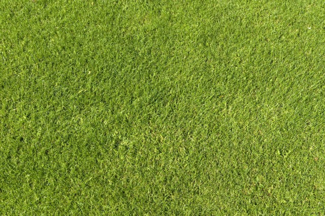 grass texture 09 e1399399259226 65+ Free High Resolution Grass Textures