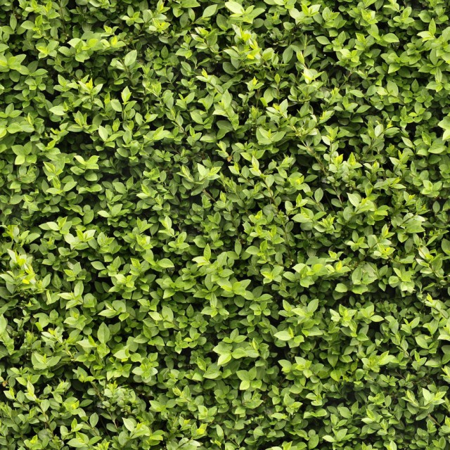 grass texture 12 e1399399596184 65+ Free High Resolution Grass Textures