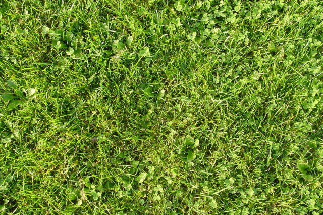 grass texture 14 e1399399899782 65+ Free High Resolution Grass Textures