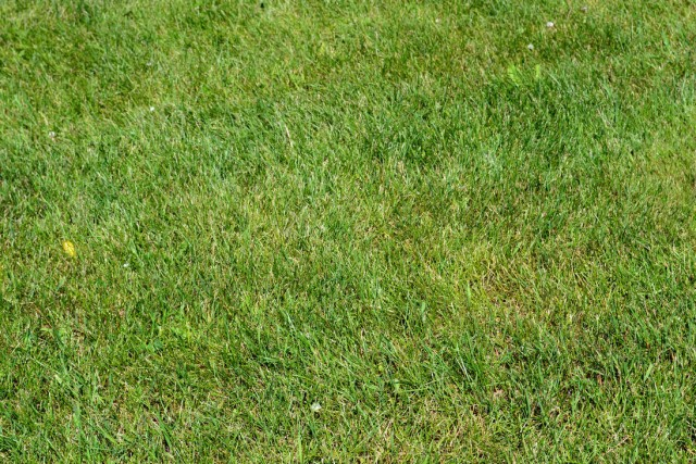 grass texture 16 e1399400190997 65+ Free High Resolution Grass Textures