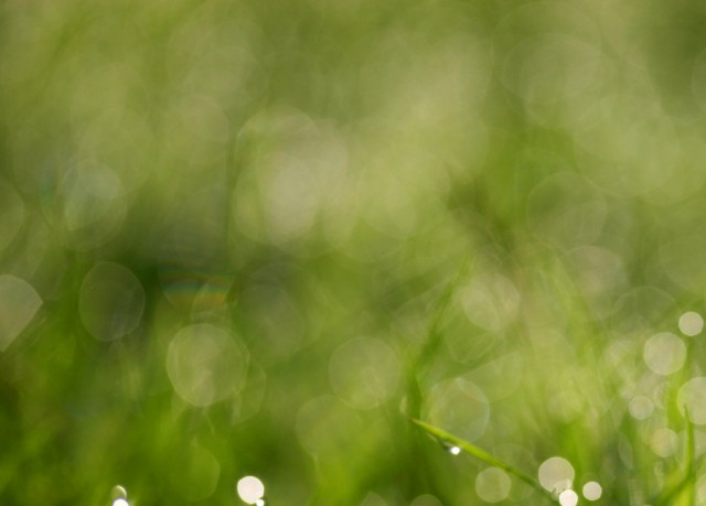 grass texture 18 e1399400728183 65+ Free High Resolution Grass Textures