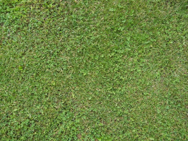 grass texture 19 e1399400963764 65+ Free High Resolution Grass Textures