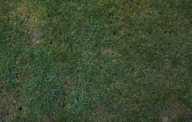 grass texture 20 e1399401099399 65+ Free High Resolution Grass Textures