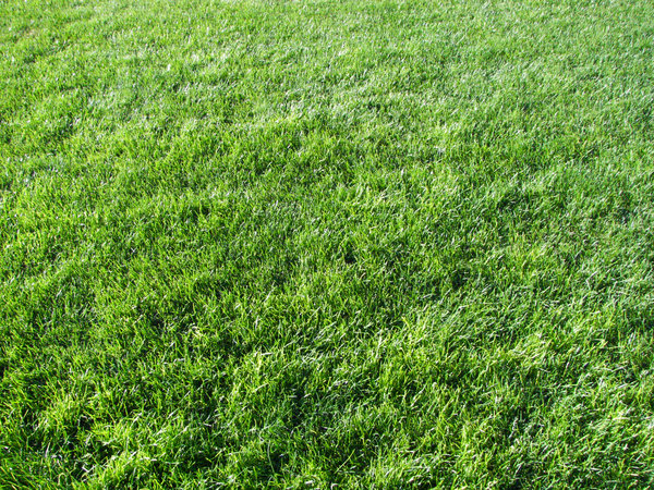 grass texture 21 65+ Free High Resolution Grass Textures
