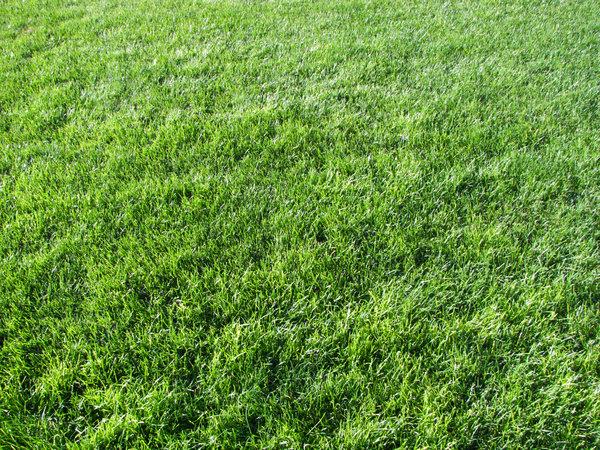 65 Free High Resolution Grass Textures Creatives Wall