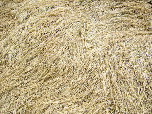 grass texture 22 65+ Free High Resolution Grass Textures