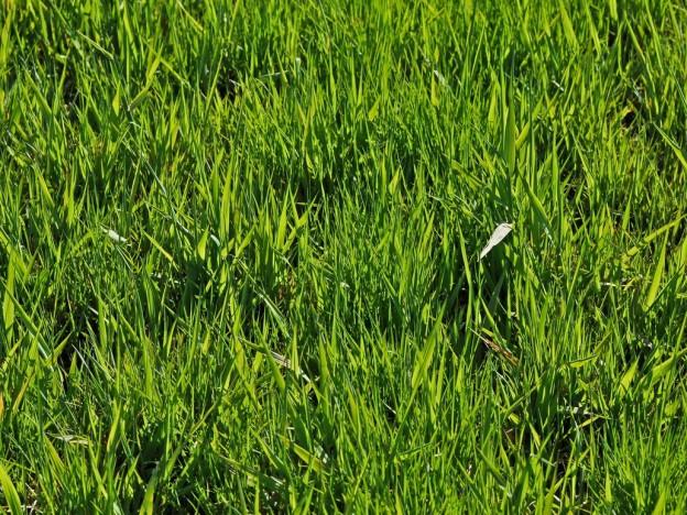 tall grass texture. 65+ Free High Resolution Grass Textures Tall Texture R