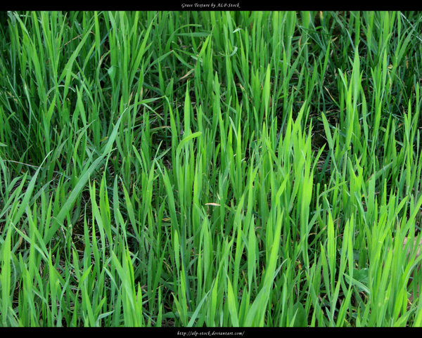 grass texture 24 65+ Free High Resolution Grass Textures