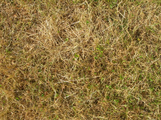 grass texture 28 e1399401614418 65+ Free High Resolution Grass Textures