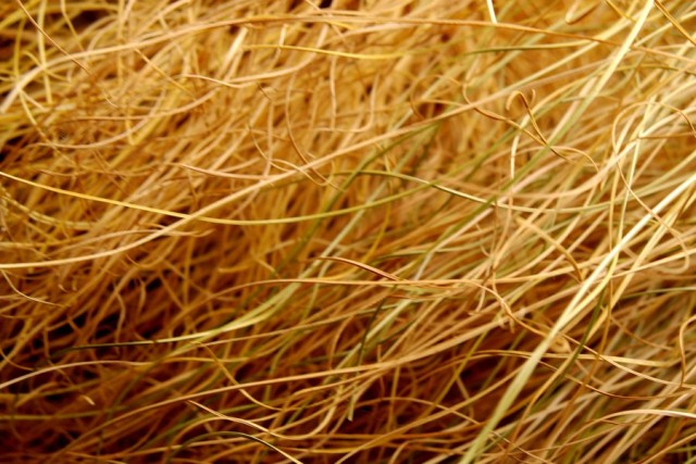 grass texture 30 e1399401787257 65+ Free High Resolution Grass Textures