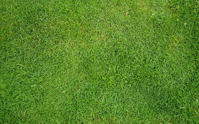 grass texture 01 65+ Free High Resolution Grass Textures