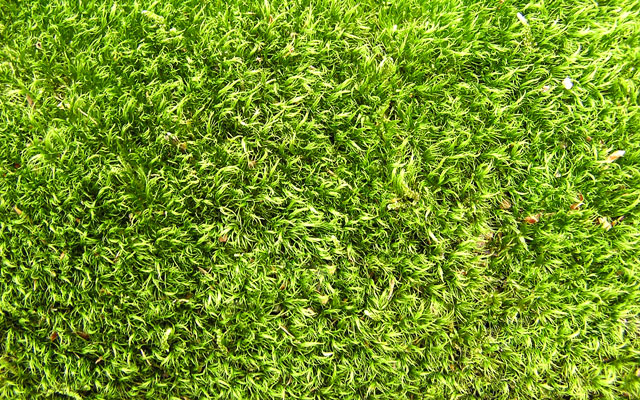 grass texture 02 65+ Free High Resolution Grass Textures