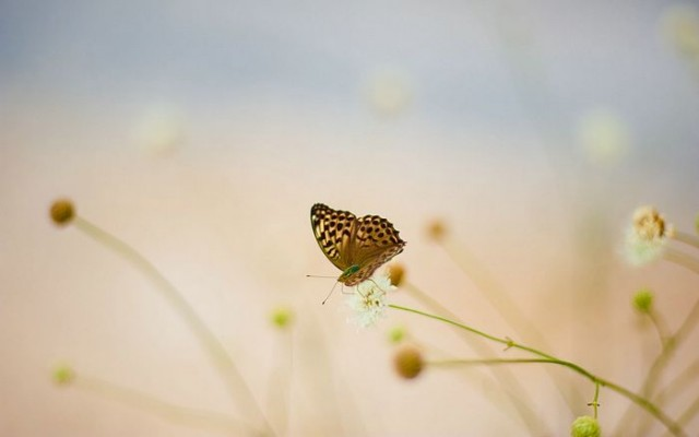 Butterfly , Soft and Pastal Colors
