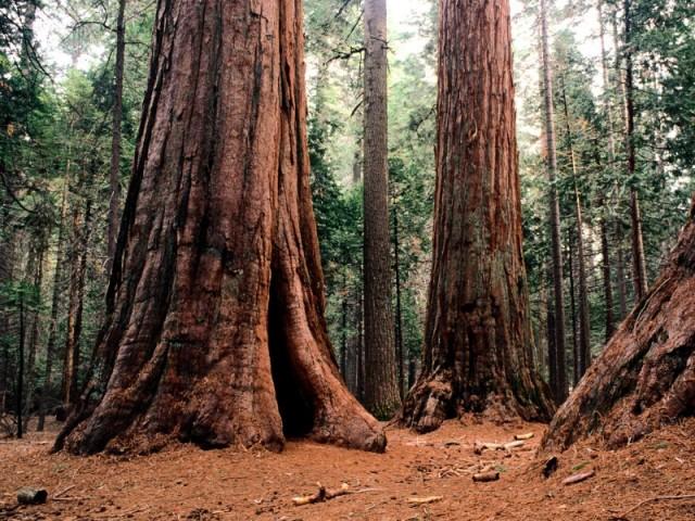 Giants Calaveras State Park