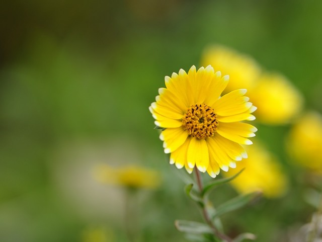 Yellow Flower With Little White Color On Petals Wallpaper